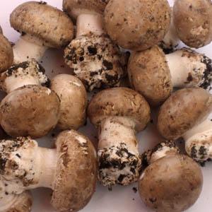 champignons de Paris (Paris mushrooms); from a website of of l'Université Pierre et Marie Curie
