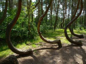 crooked forest 3