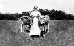 pioneer woman, two cows
