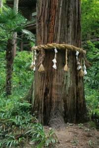 sacred_tree