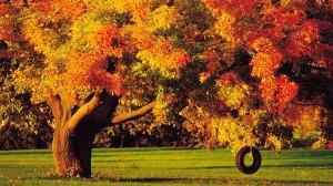 fall-trees-05